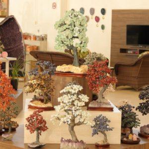 Árvores em Pedras Diversas